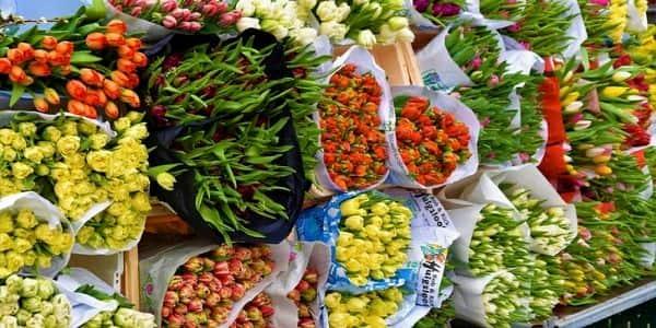 Les marchés à Lacapelle-Marival